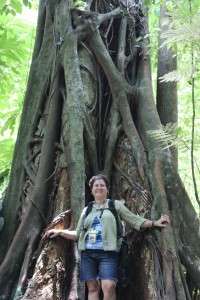I can't get over these huge amazing trees-they're everywhere.