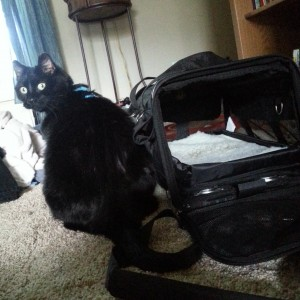 travel cat carrier