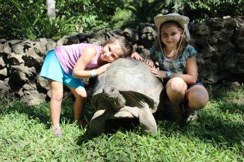 turtle eco park aluxes