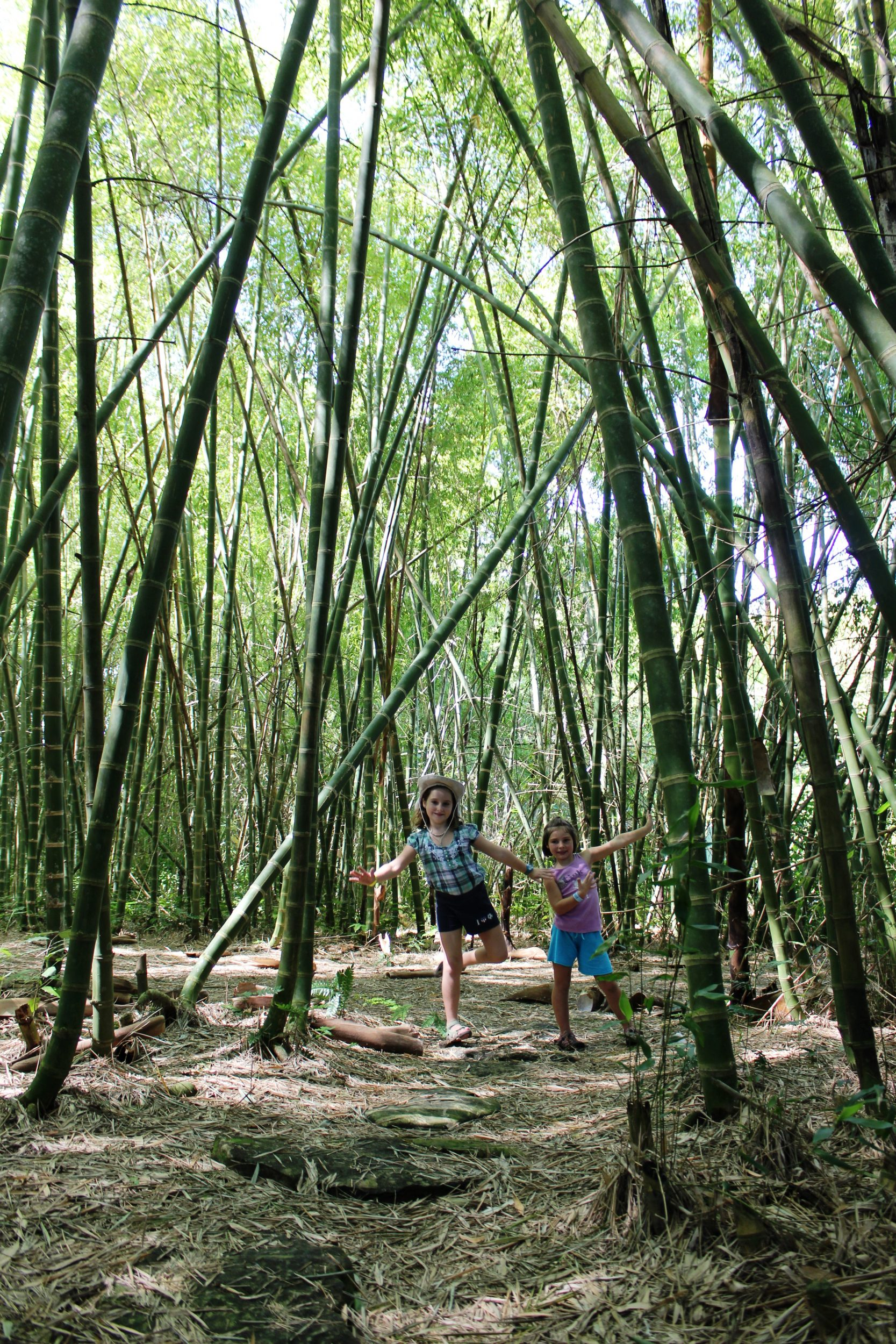 bamboo eco park aluxes