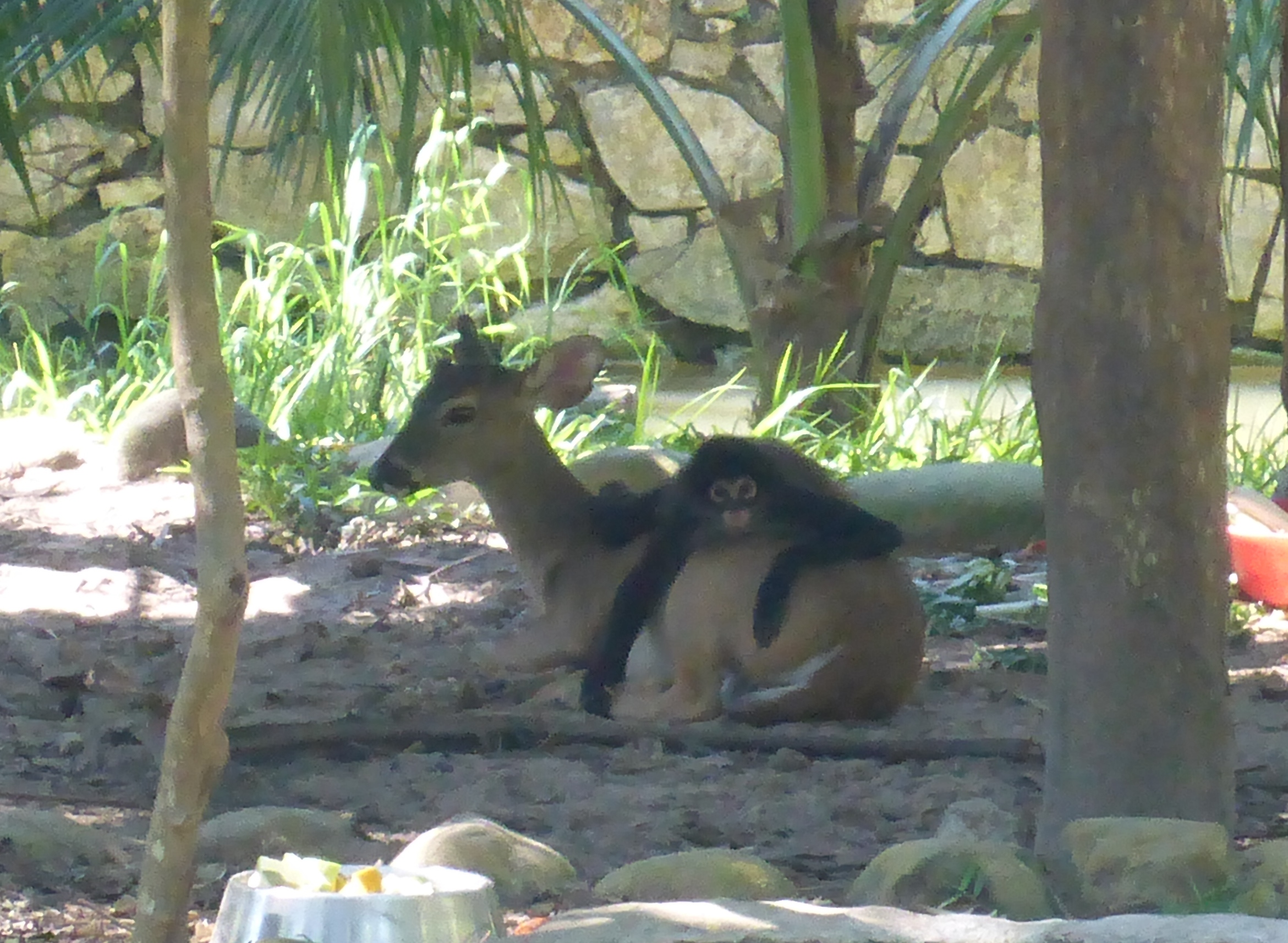 deer monkey palenque