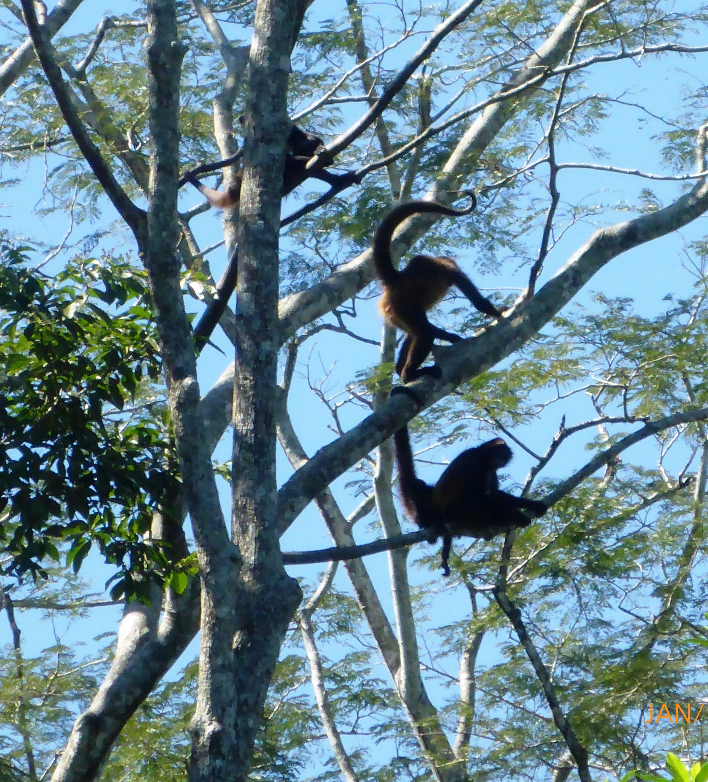 eco park aluxes palenque